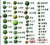 效果图 植物 cad/常见植物CAD园林图集...