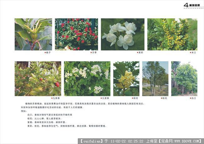 公园、设计说明的植物浏览,图纸方案设计,楼房园林电路看怎么里图片图片